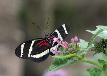 Photographie de Farfalle nella testa