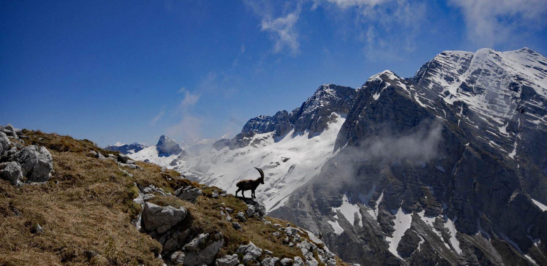 Monte Canin | Ph. Marco di Lenardo