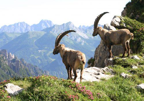 Archive du Parc des Dolomites Frioulanes: Photographie de David Cappellari