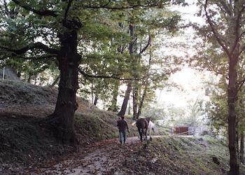 Photo Azienda Agricola e Agriturismo Ronco Albina