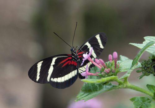 Archive de la Maison des papillons de Bordano: Photographie de Farfalle nella testa