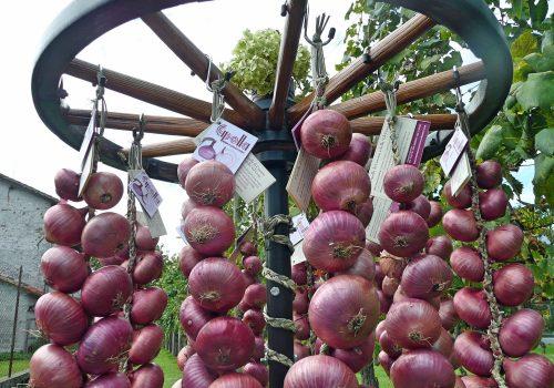 Associazione Produttori Cipolla Rossa di Cavasso Nuovo   Ph. Az. Agricola Luigi Mariutto