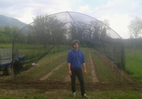 Associazione Produttori Cipolla Rossa di Cavasso Nuovo   Ph. Az. Agricola Gianni Carpenedo